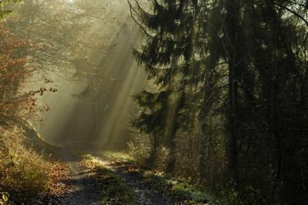 forest-path-sunshine-924x618