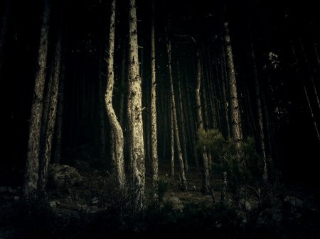 forest_at_night_1