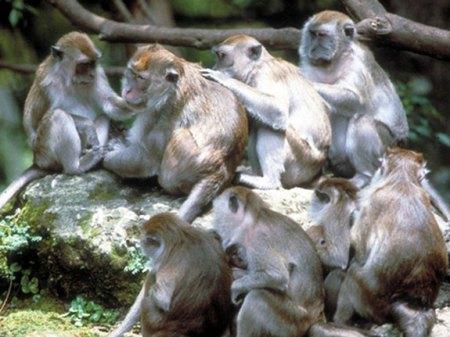 monkey-community
