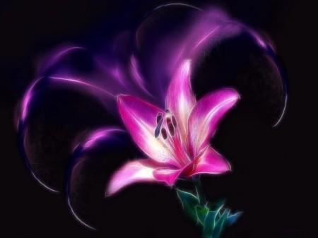 purple-lily-on-black