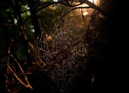historic-mill-creek-discovery-park-spider-web-3d827649b82df87c