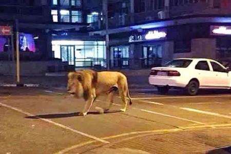 389383_lion41